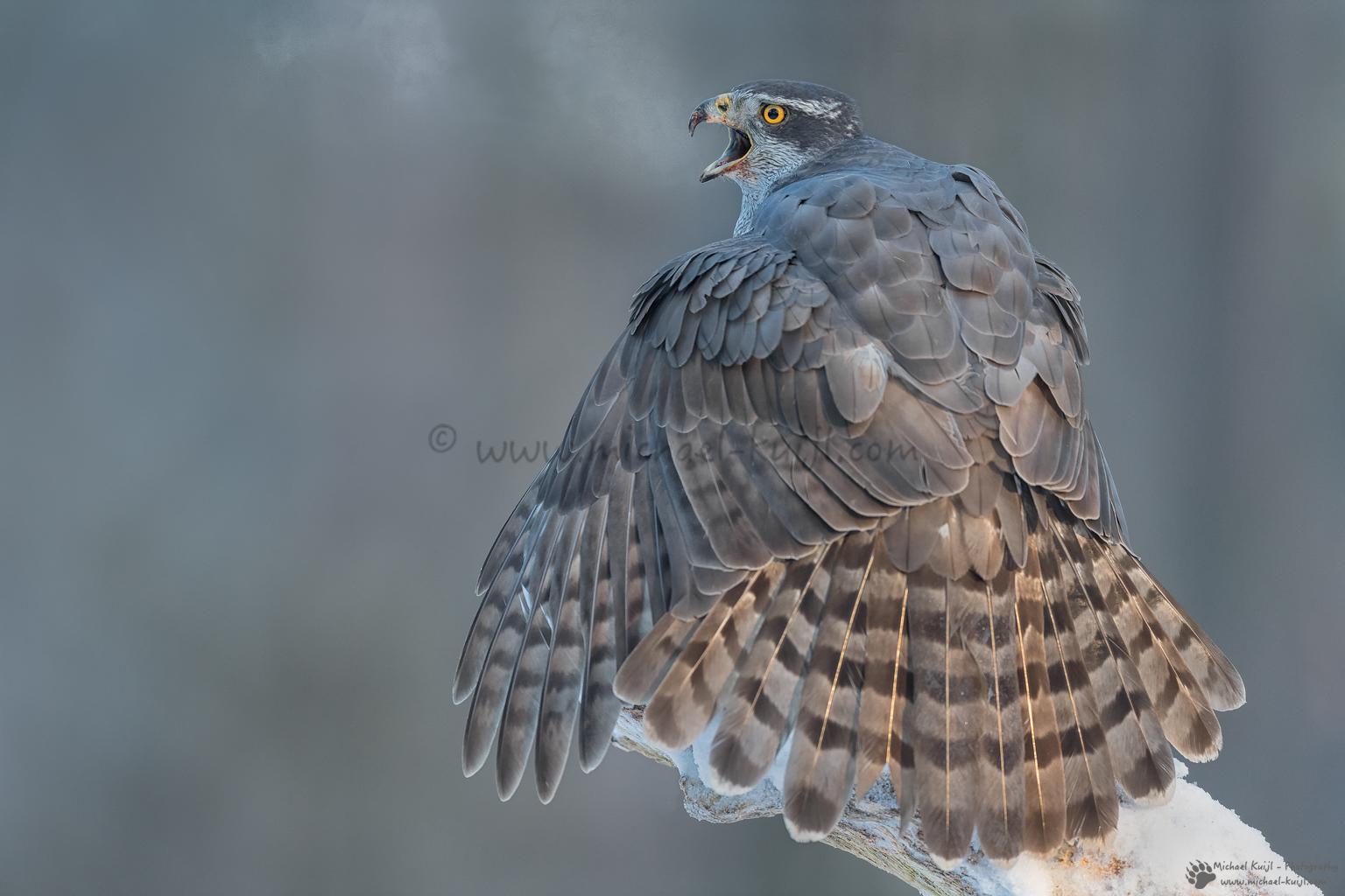 [ Birds ]